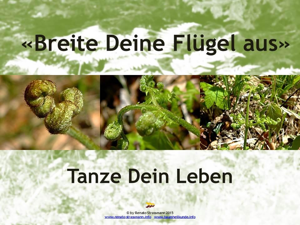breite_deine_fluegel_aus_adlerfarn