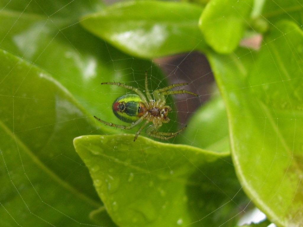 Spinne_01_wegzeichen