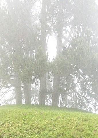 Atem der Bäume